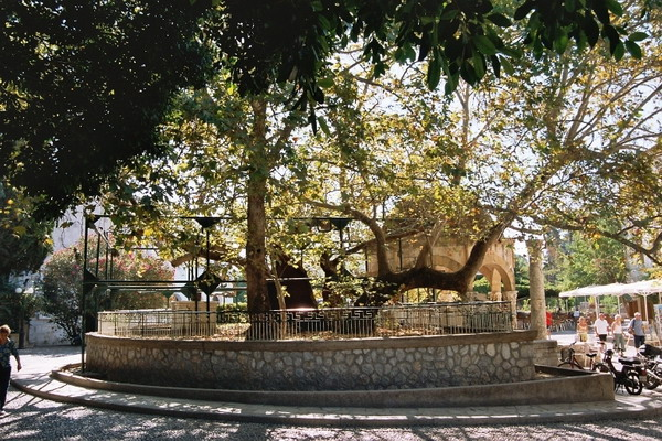 Платан на острове Кос, под которым по преданию работал Гиппократ