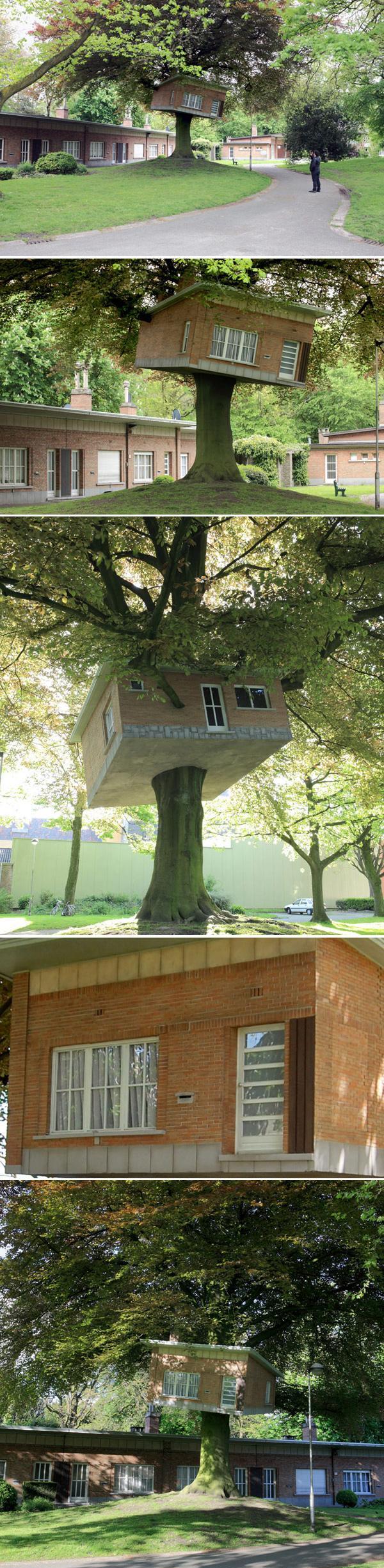 Дерево Дом, Бельгия