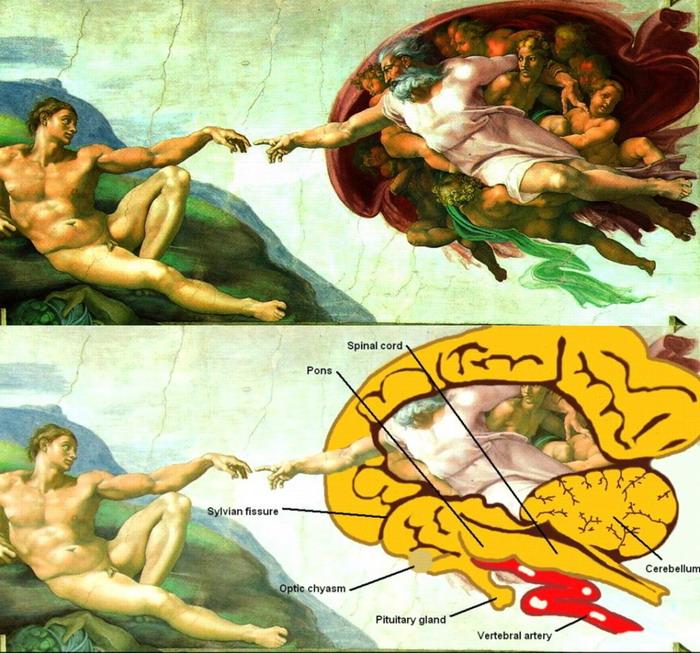 Секреты фрески «Сотворение Адама»