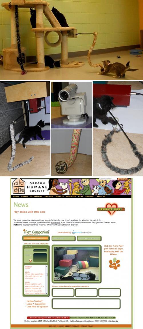 Игра с котятами через интернет («iPet Companion»)
