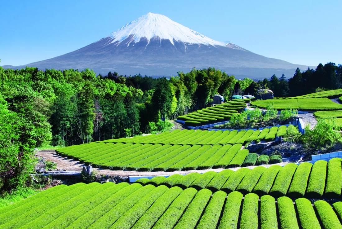 Ландшафт горы Фудзи (Fuji)