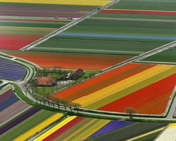 Цветные поля, Нидерланды