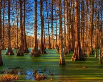 Восход в болотах Луизианы