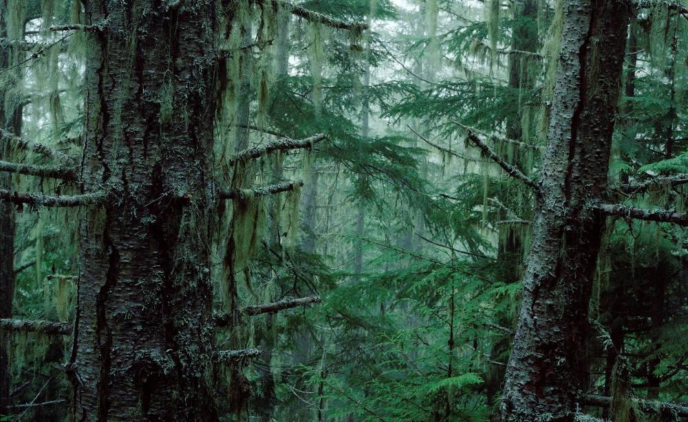 Дождевой лес, Олимпия, США