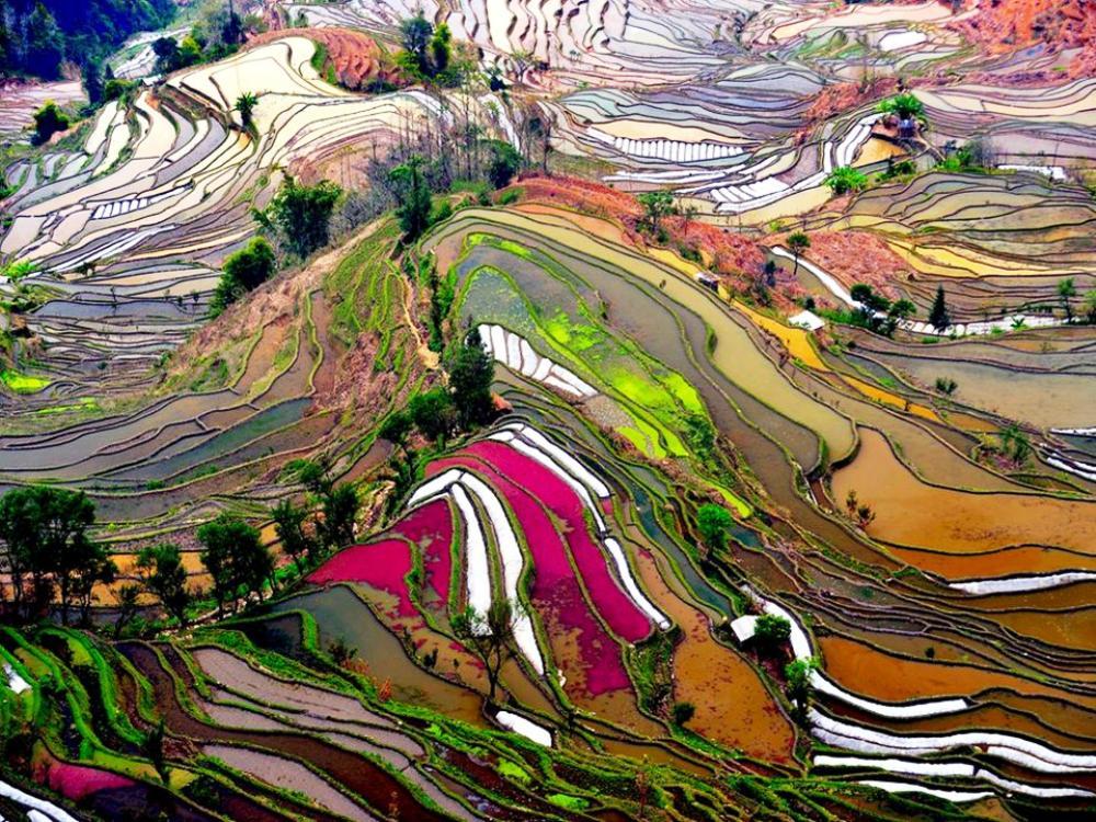 Рисовые поля, Юньнань, Китай