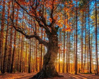 Красота Родопских гор, Болгария, Греция