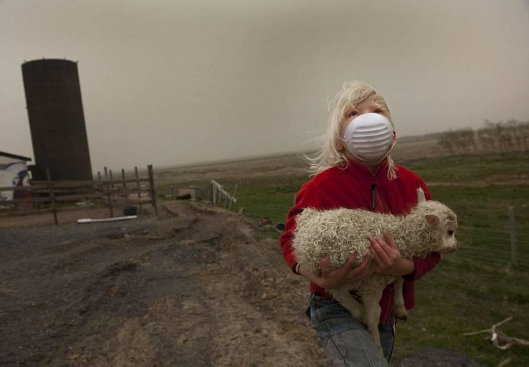 Спасение ягненка после извержения вулкана в Исландии