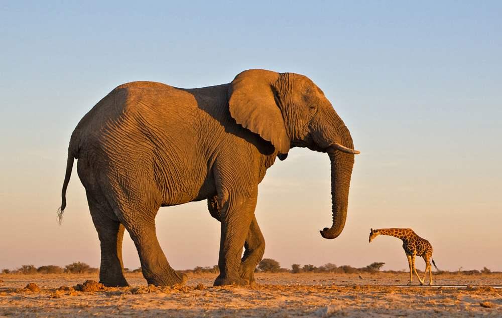 Экзотические перспективы, Намибия, Юго-Западная Африка
