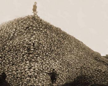 Уничтожение бизонов в Америке