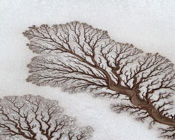 Дерево или русло реки? Нижняя Калифорния, Мексика