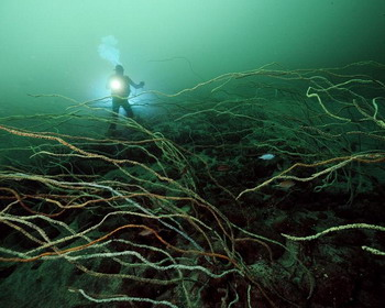 Глубины коралловых рифов, Япония